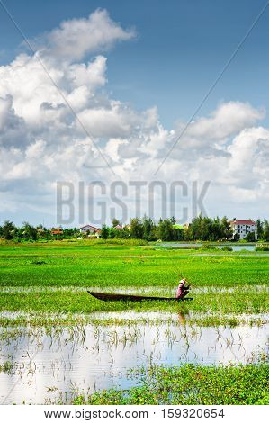 Rower Wearing Vietnamese Conical Hat On Boat Among Rice Fields