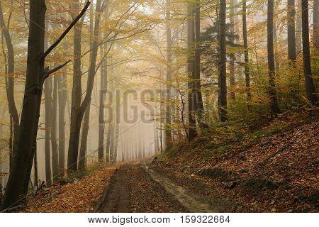 Path through the autumn forest. October, Poland.