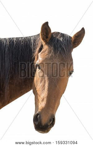 Portrait Of The Head Of A Wild Horse Isolated On White Background