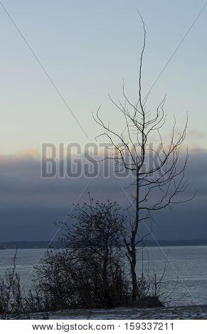 arbor sine foliis Rubum hiems Sinum Finland mare est opertum cum glacies in litore caeruleum