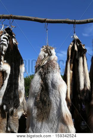 Lapin, mink and raccoon tanned furs and skins hanging