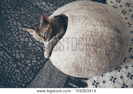 Devon Rex cat is sleeping in felted warm sleeping bed.  Cat likes to sleep in comfartable cat bed made of wool - simple, minimal handmade design. Happy chilling cat. Copy-space blank for your text or advertisement content