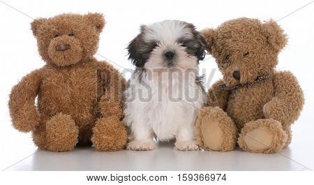 shih tzu puppy tucked between two teddy bears