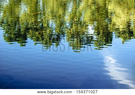 Forest trees reflected in water of pond in summer time, a lot of space for text, copyspace.