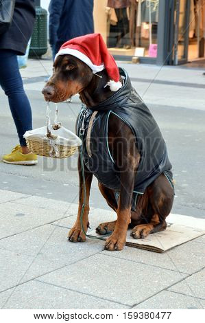 Dog sitting on the street holding a basket in the mouth with a christmas cap