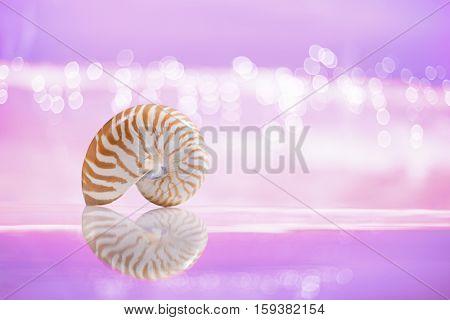 nautilus sea shell  with reflection on  festive glitter background