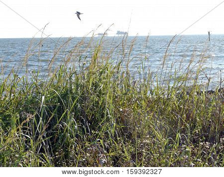 Distant oil rigs co-exist with nature near Dauphin Island Alabama. This natural gas field in Mobile Bay is mined with a zero discharge policy.