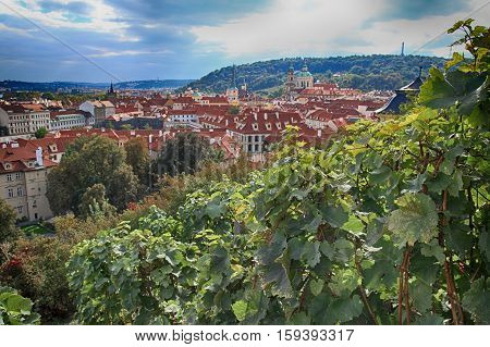 Vineyard of Prague near Hradcany hill and panoramic view of Prague, Czech Republic. Selective focus