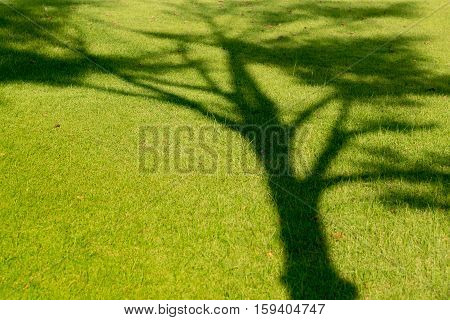 Tree shadow on green grass in summer.