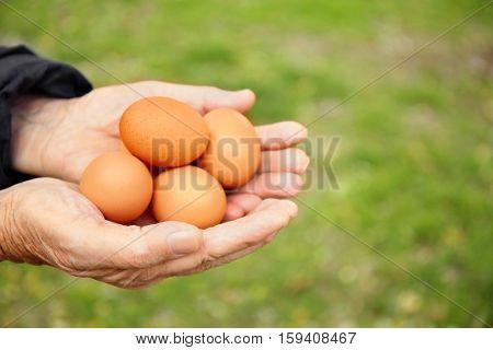 Senior woman hands holding raw eggs, closeup
