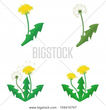 Dandelions Vector Set