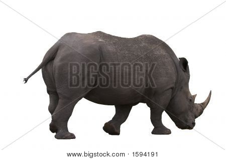 Rhino_White_Background