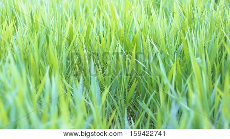 Green Grass Field In Nature