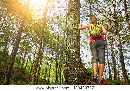 Woman watching pine forest. Ecotourism concept image with happy female hiker.