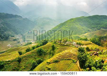 Sunlit Green Rice Terraces At Highlands, Sa Pa District, Vietnam