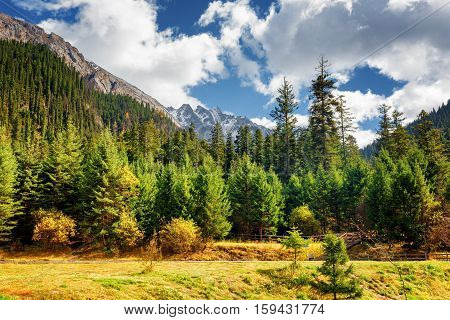Scenic View Of Primeval Forest And Snow-capped Mountains