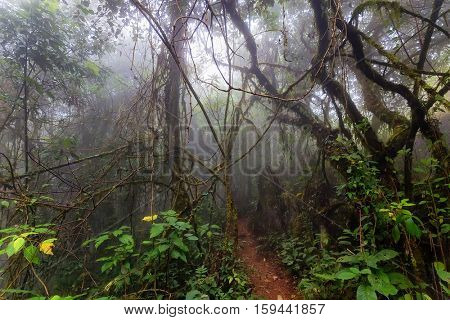 Mysterious misty jungle in the Chiang dao mounts, Thailand