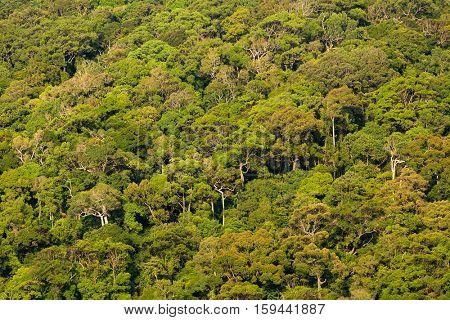 Tropical rainforest on the Koh Lanta island east coastline, Thailand