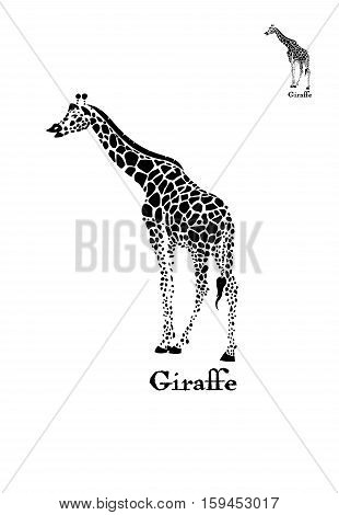 Vector giraffe logo illustration. Wild animal. Can be used for background, card, print materials.