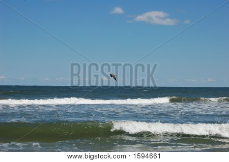 Bird Above Wave