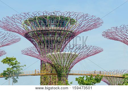 SINGAPORE - OCTOBER 09 2016: Singapore Supertrees in garden by the bay at Bay South Singapore.