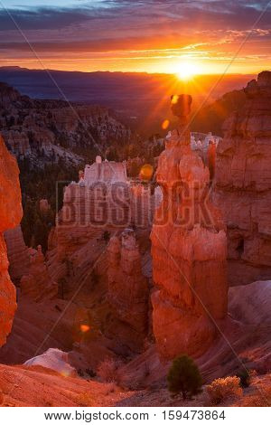 Thor's Hammer and hoodoos in Bryce Amphitheater at sunrise Bryce Canyon National Park Utah