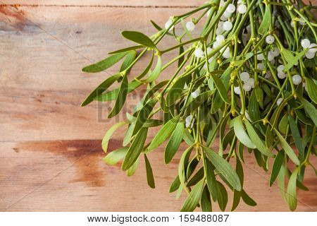 Broom from green mistletoe on wood desk. Nature background. Christmas plant