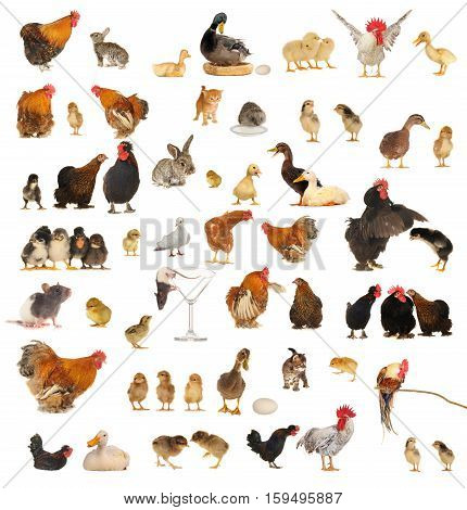 Histories about animals which live on a farm