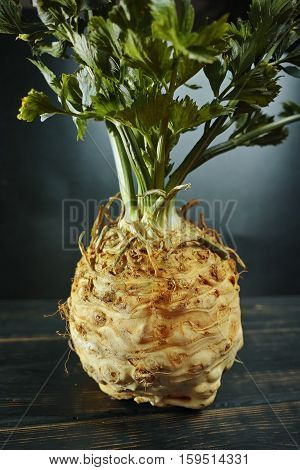 Celery root - celeriac fresh healthy vegetable with green shoots