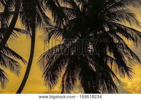 Low angle view of palm trees silhouette against orange sky background at Pipa Brazil