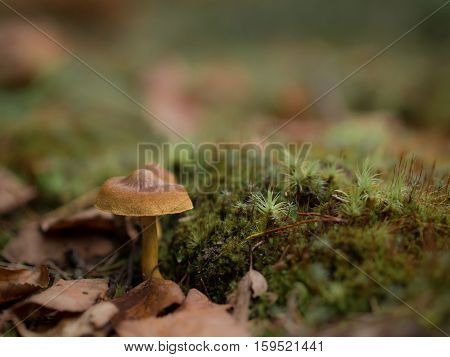 Little colourful mushroom on a tree and grass lonely in forest