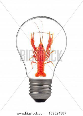 a bulb crayfish isolated on white background