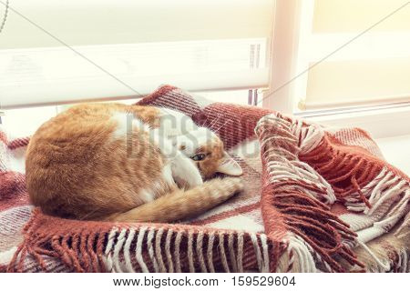 Red Cat Sleeping In Warm Wool Plaid Blanket