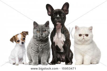 Groep van honden en katten voor witte achtergrond