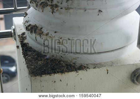 Bird Droppings Strewn Pole Home