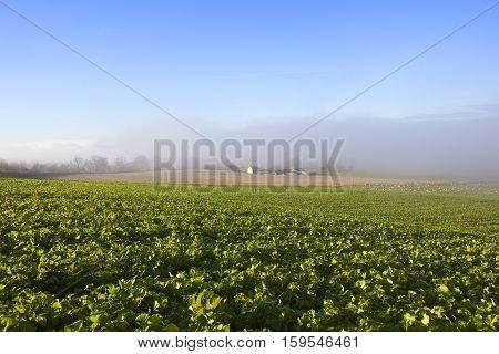 Misty Fodder Crops