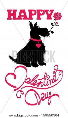 Holiday card. Calligraphic hand written text Happy Valentine`s Day and scottish terrier dog silhouette with rose isolated on white background.