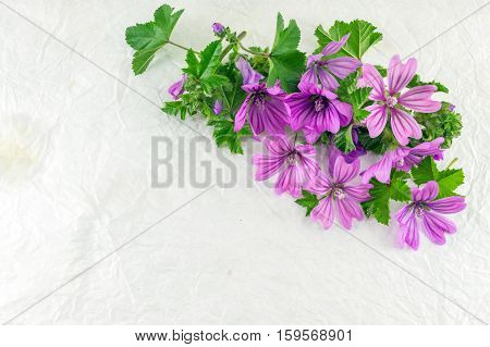 Malva Sylvestris, Mallow, Flowers Bouquet On White