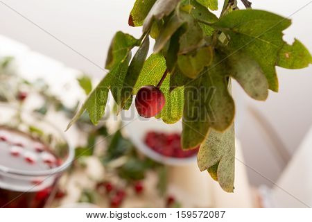 Hawthorn With Leaves