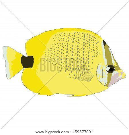 Milletseed Butterflyfish Vector Illustration on white background