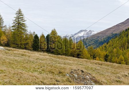 Mountain autumn landscape with yellow grass and grey skies