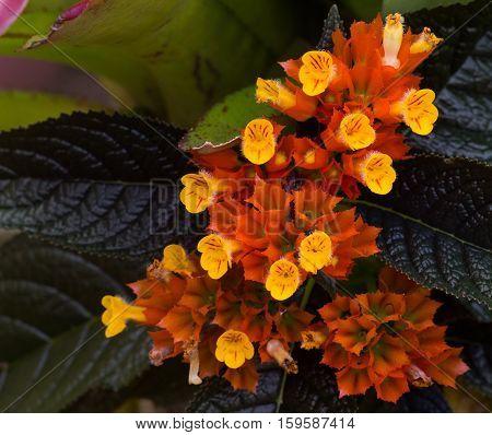 orange flowers in garden flowerbed. outdoor in spring