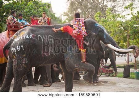 AYUTTHAYA,THAILAND-APRIL 14,2016 : Mahout Unknown He climbed up to the back of an elephant at Wangchang Lae Phanait, Ayutthaya Historical Park in Ayutthaya city,Middle of Thailand.