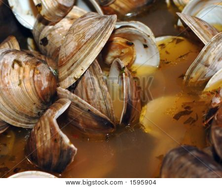 Clams_Filtered