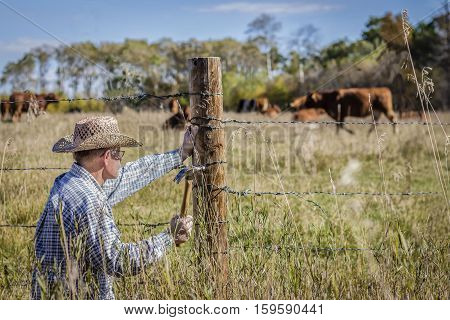 horizontal image in a rural setting of a farmer crouched down to fix his barb wire fence with cows grazing in the background on a warm summer day
