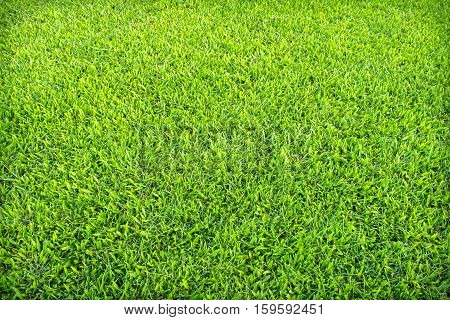 Green grass texture from a field / grass nature background