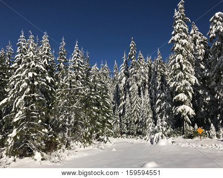 Fir trees covered in fresh snow tower over a crossing sign on a sunny winter day in the Willamette National Forest in Western Oregon.