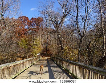 bridge in fall over the Potomac River
