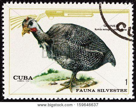 CUBA - CIRCA 1970: A stamp printed in Cuba shows Helmeted Guineafowl (Numida Meleagris), circa 1970.