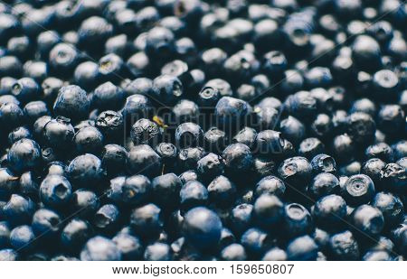 Background photo with bilberry, photo with selective focus